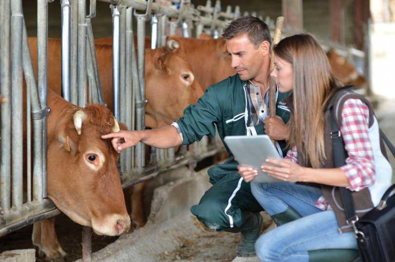 Preparatório para concurso MAPA - Médico Veterinário